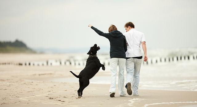 blog-dog-walk-beach