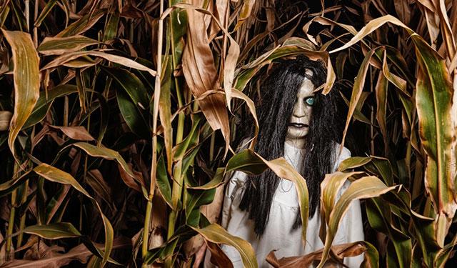 blog-spooky-corn-maze