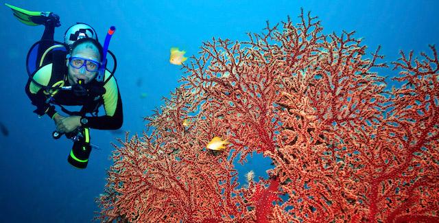 blog-coral-scuba-diving