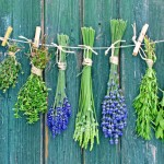 What Are Nature's Best Herbal Medicines?