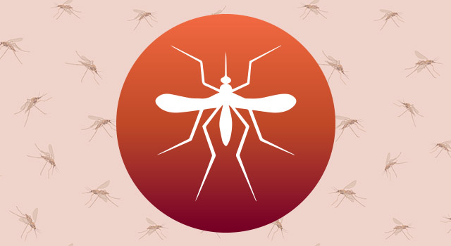 blog-mosquito-control-tips