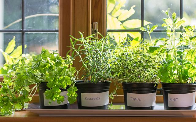 blog-indoor-gardening