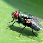 6 Types of Fly Bites You May Get this Summer (And What to Do About Them)